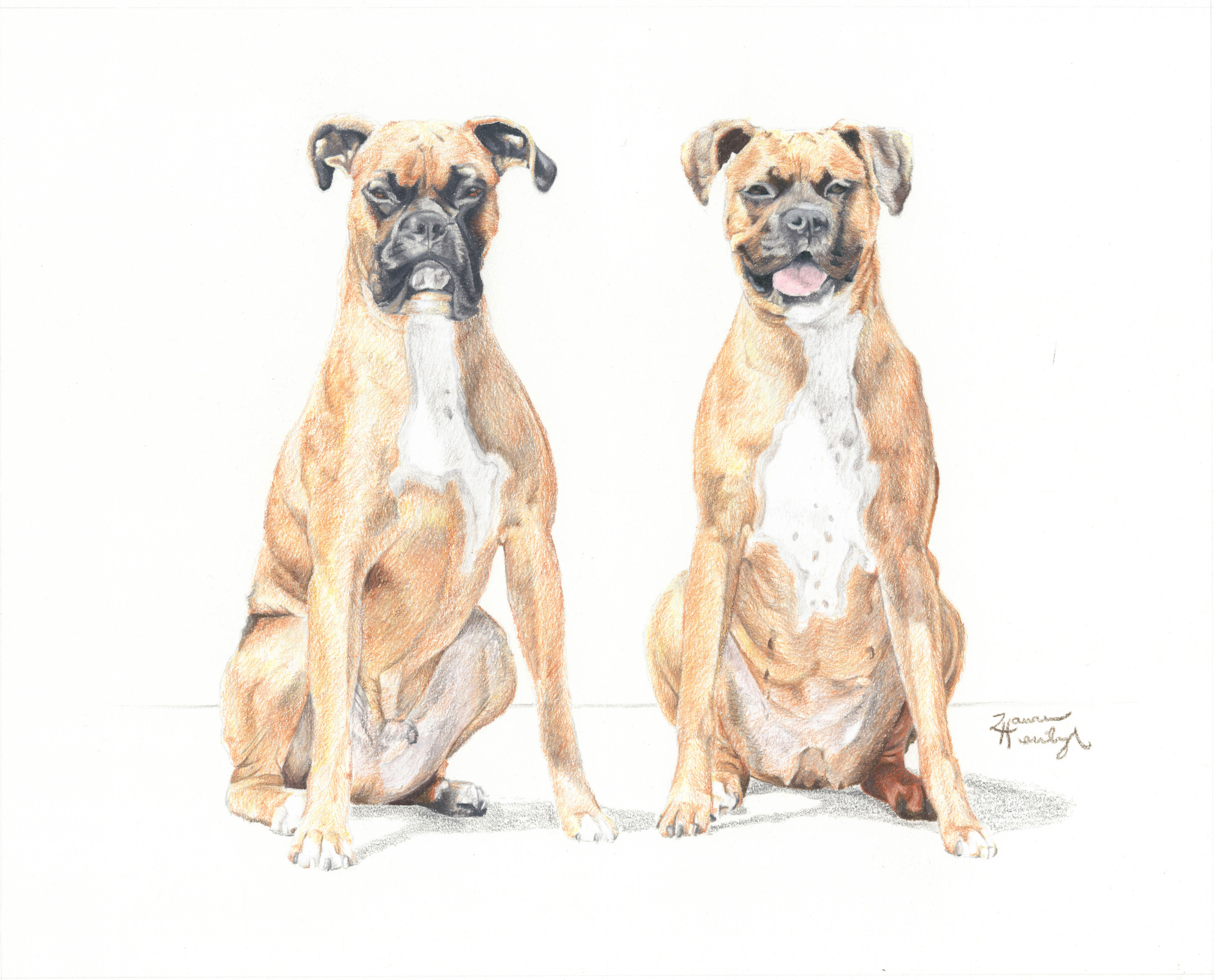 Diesel and Roxie the Boxers (2013)