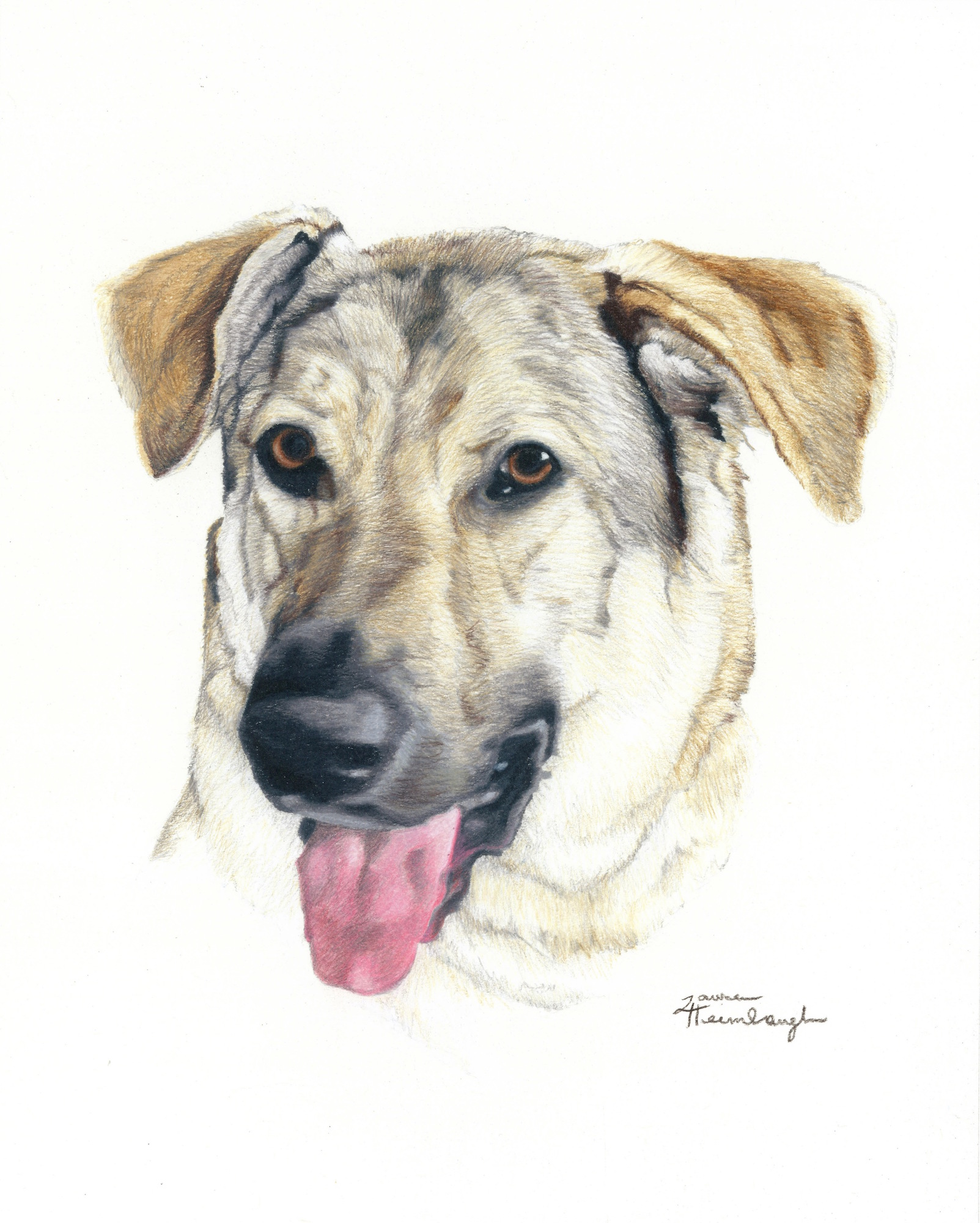Zeus the Anatolian Shepherd (2013)