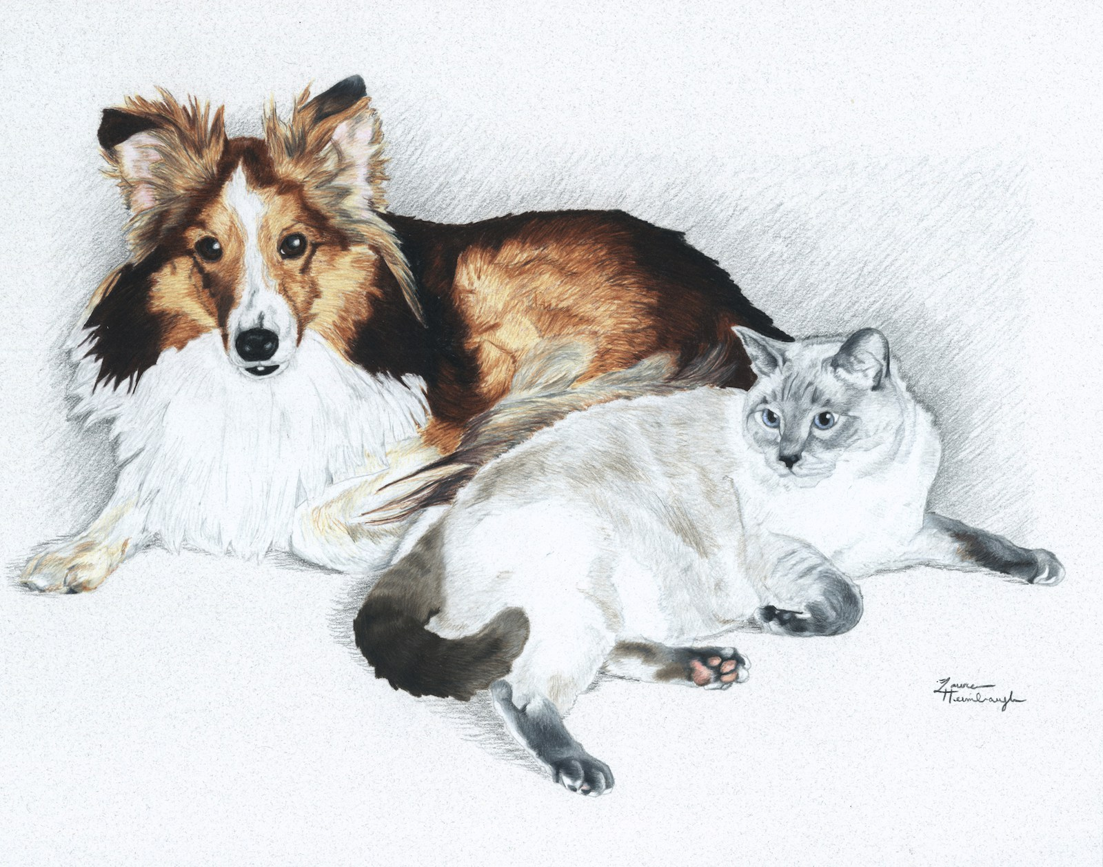 Shawnee the Sheltie and Winter the Cat (2013)