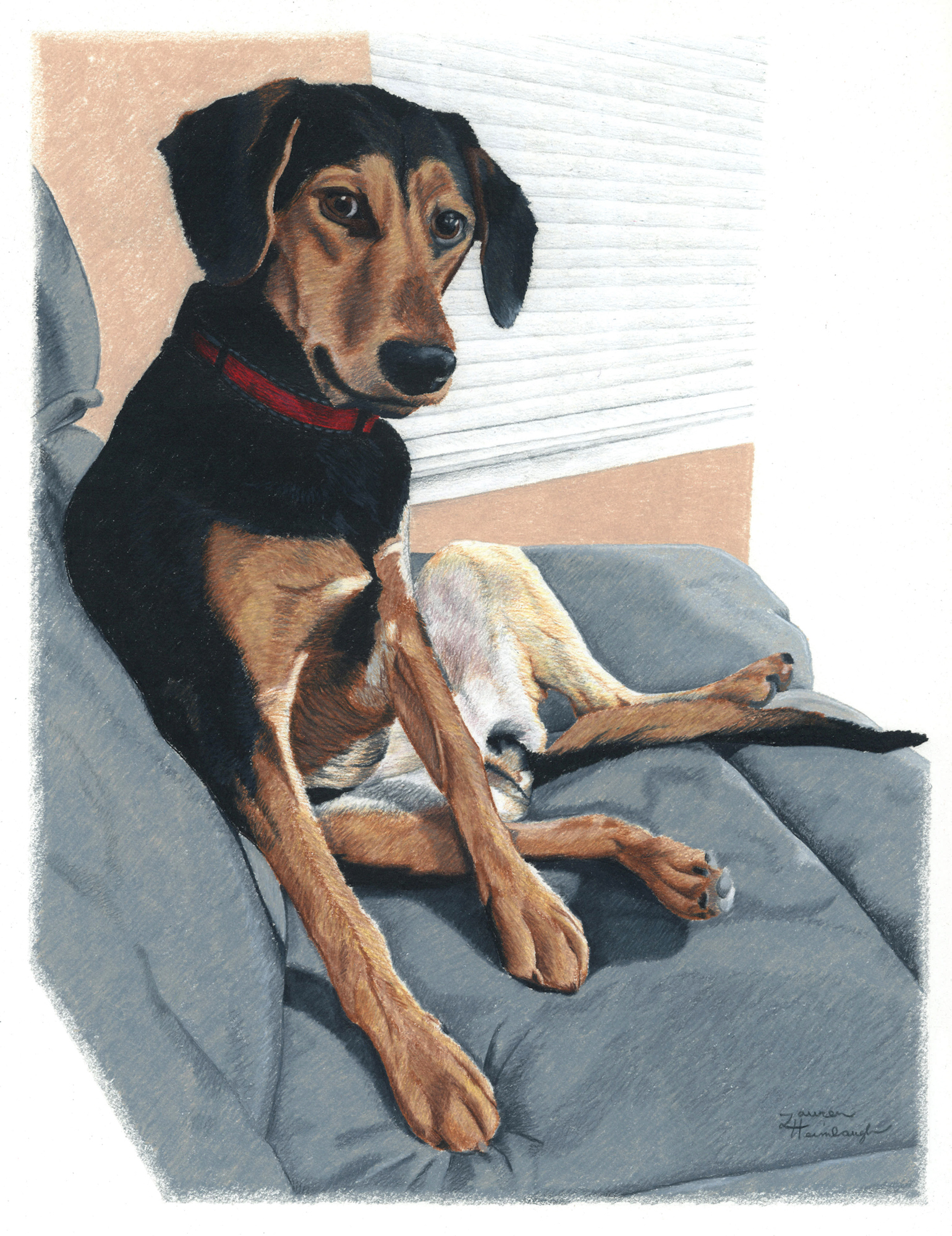 Scout the Beagle / Coonhound Mix (2013)