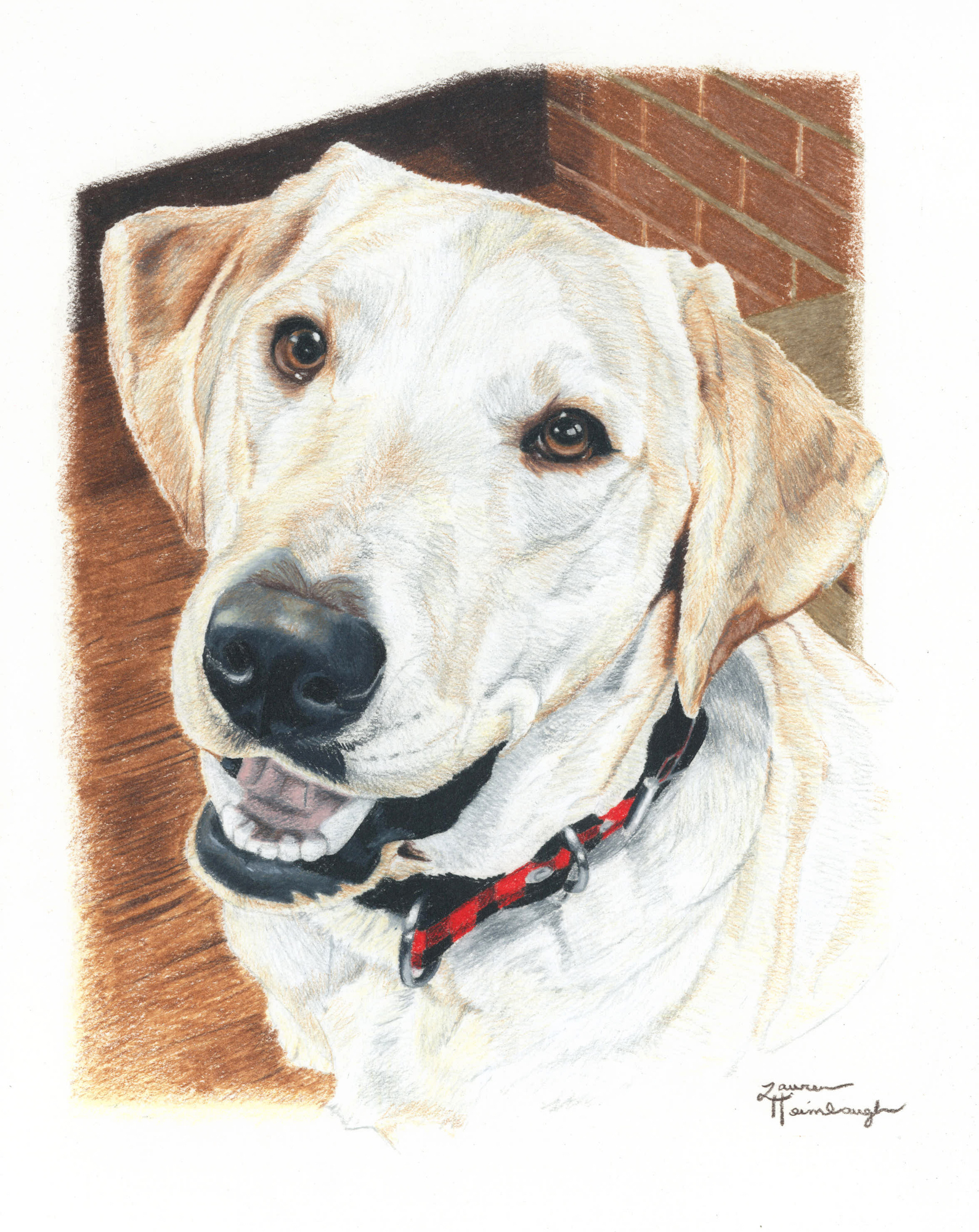 Truman the Labrador Retriever (2013)