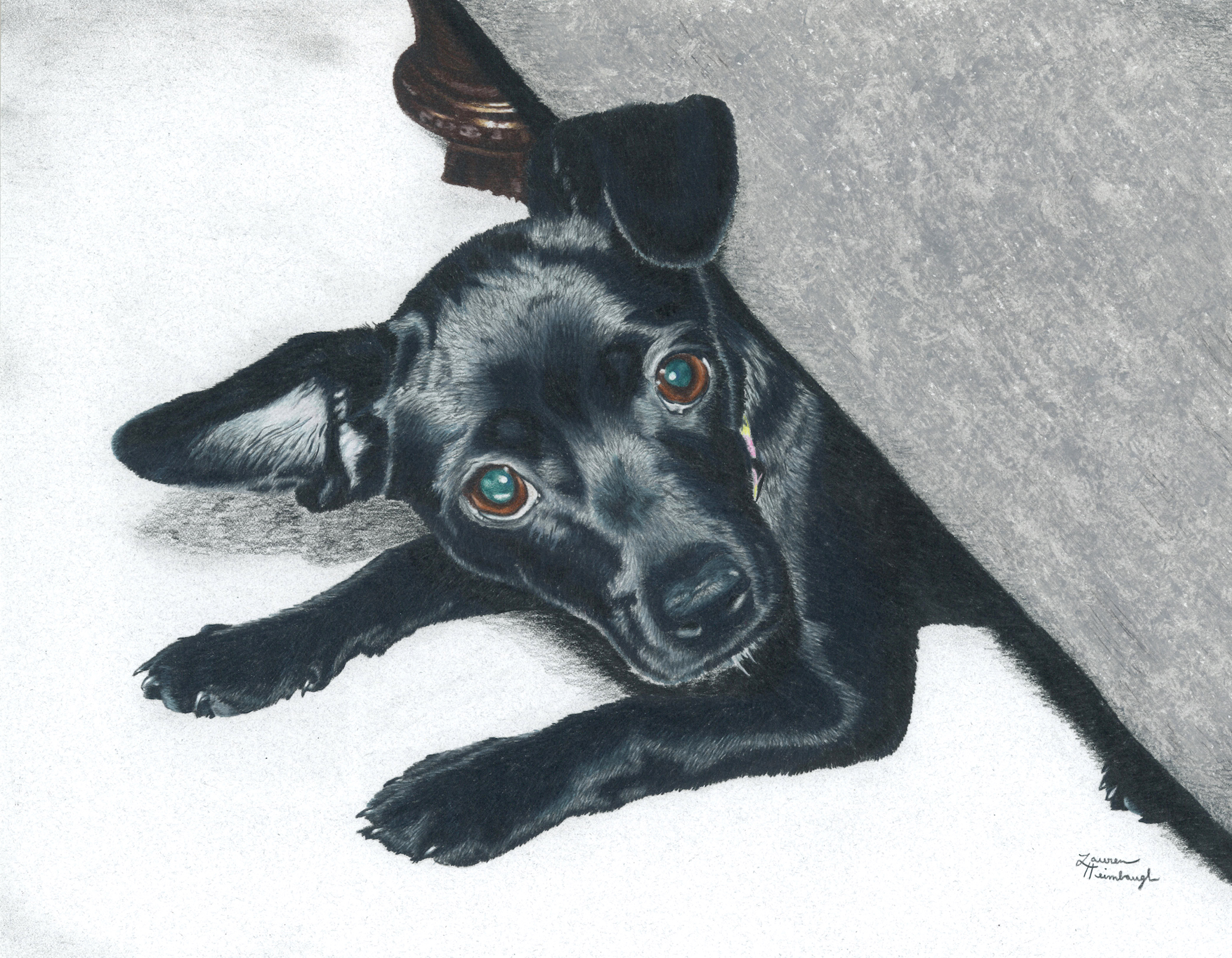 Luna the Chihuahua / Dachshund Mix (2011)