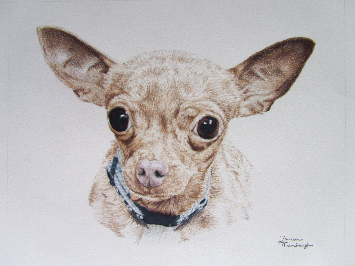 Charlotte the Chihuahua (2010)