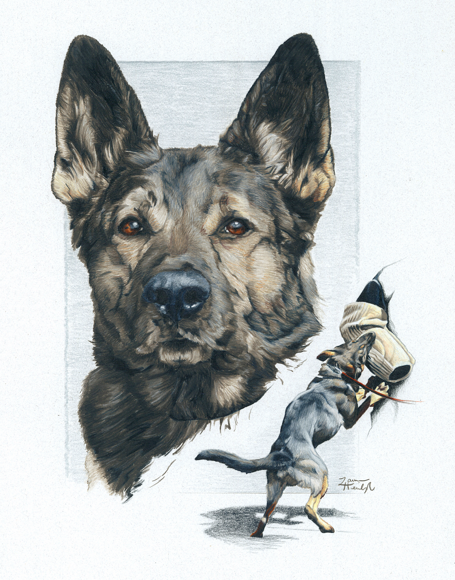 Missoula PD K9 Halo the German Shepherd (2015)