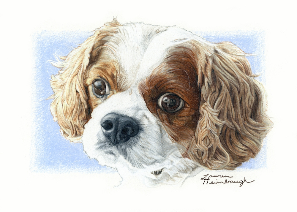 Lady the Cavalier King Charles Spaniel (2017)