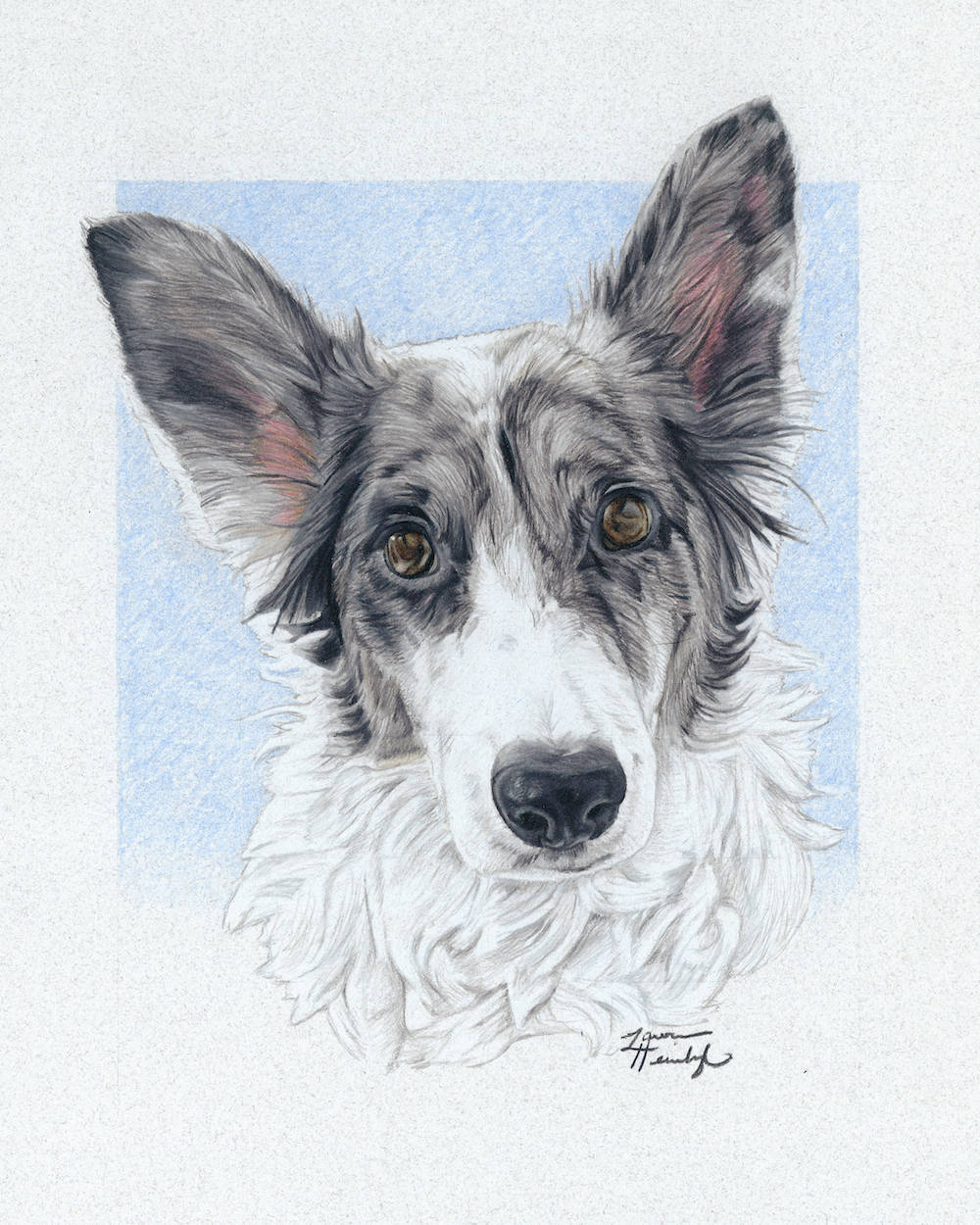 Grey the Border Collie (2017)