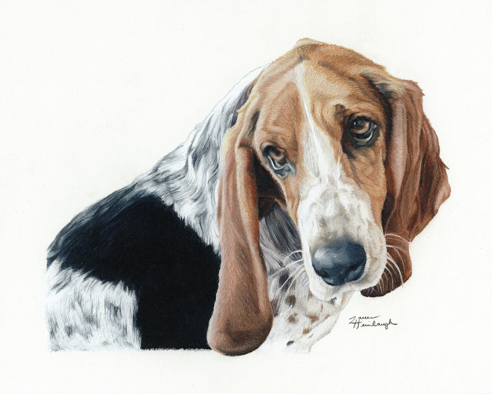 Hugo the Basset Hound (2018)