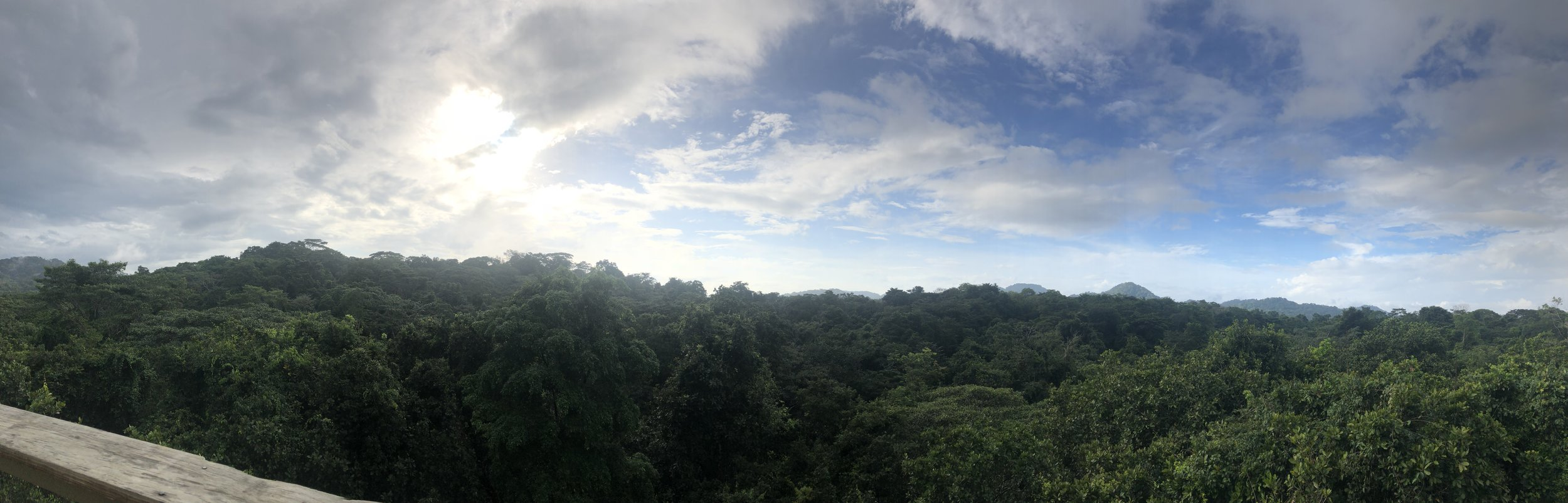 View from atop the rainforest canopy