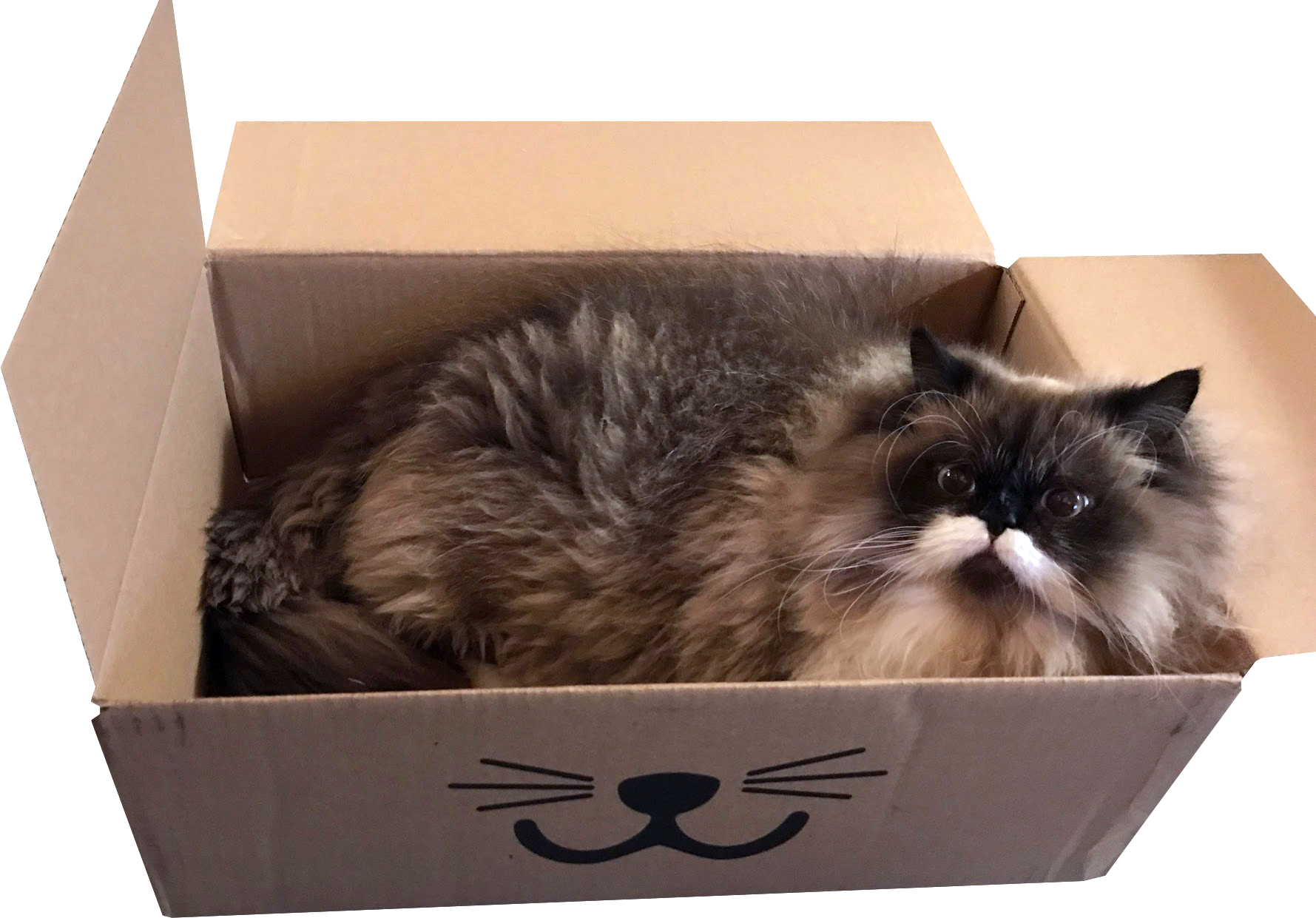 frank box cropped.jpg