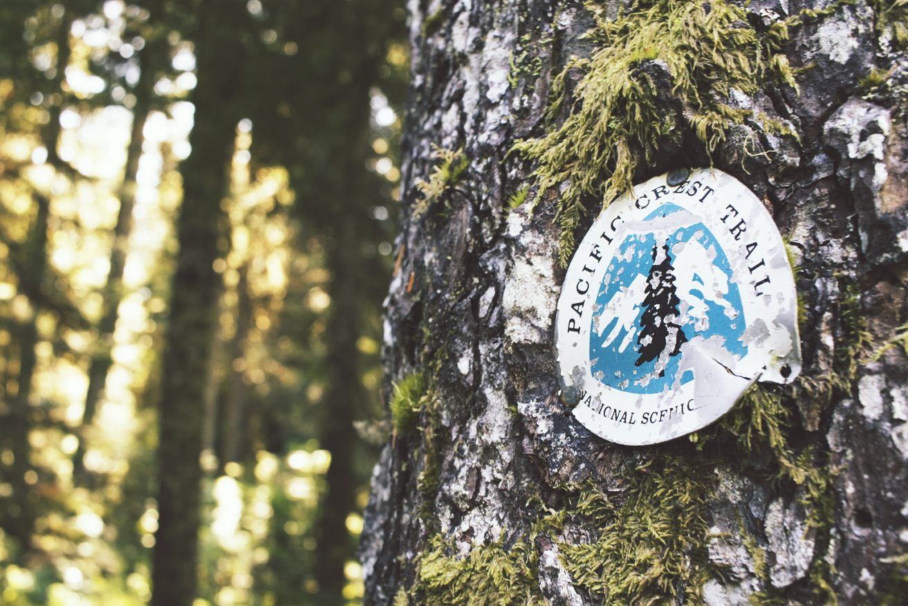 I bookended this hike the next day by heading to Snoqualmie Pass. The brief miles before heading back were like spending time with a good friend.