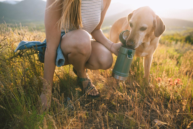 mango-dog-dogs-sunset-golden-hour-park-city-stanley-stein.jpg