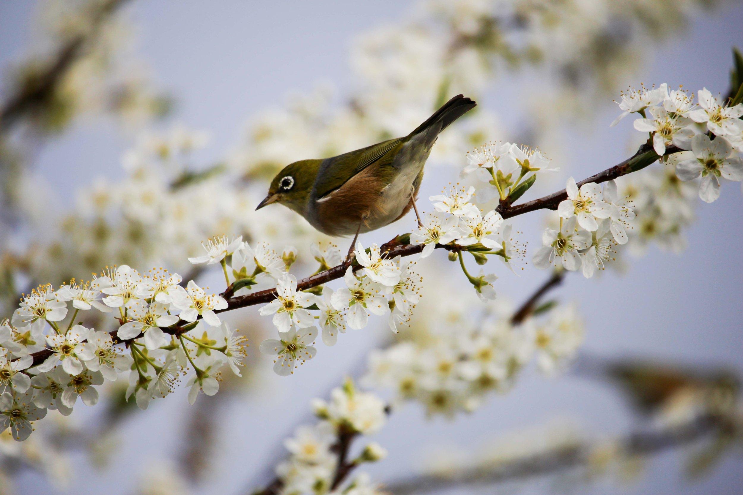 spring-flowers-birds.jpg