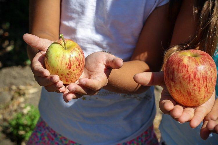 apple-picking-lynchburg