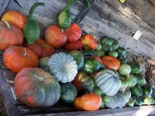 White Fall Farm - 6135 Riceville RoadGretna, VA 24557