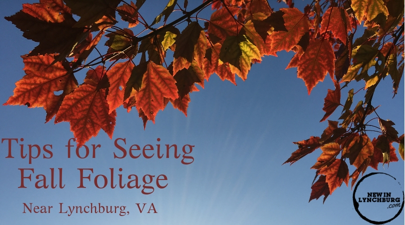Tips for Seeing Fall Foliage - There are a lot of great places to see the fall colors right here in the Lynchburg area. Check out some of my favorite spots to see the foliage.