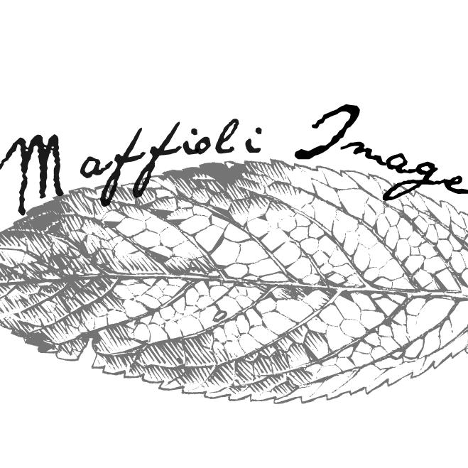 Maffioli Image