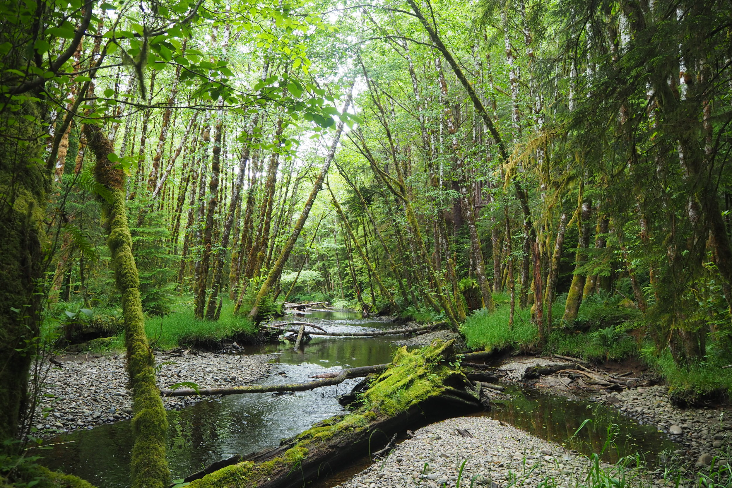 Rainforest, Haida Gwaii, Canada