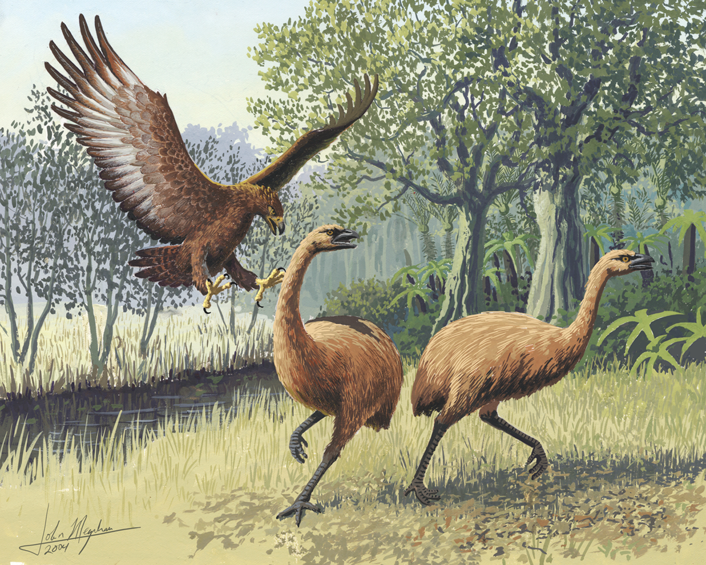 Haast's Eagle was the largest eagle known to have existed. Here it is pictured attacking moa (also extinct).  Image by John Megahan/PLoS Biology (CC BY 2.5).