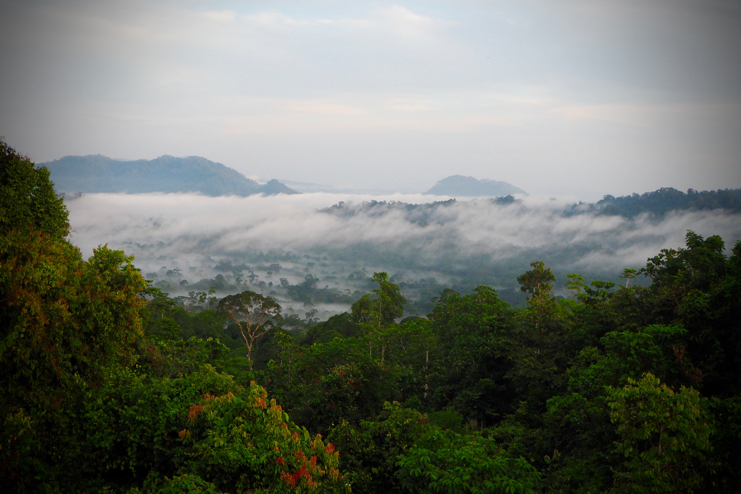 Danum Valley, Borneo