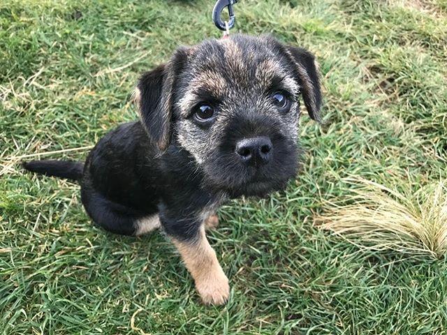 Meet Luna 🌙 the newest member of the Rykers fam 📷: @nicolarykers #dogsofinstagram