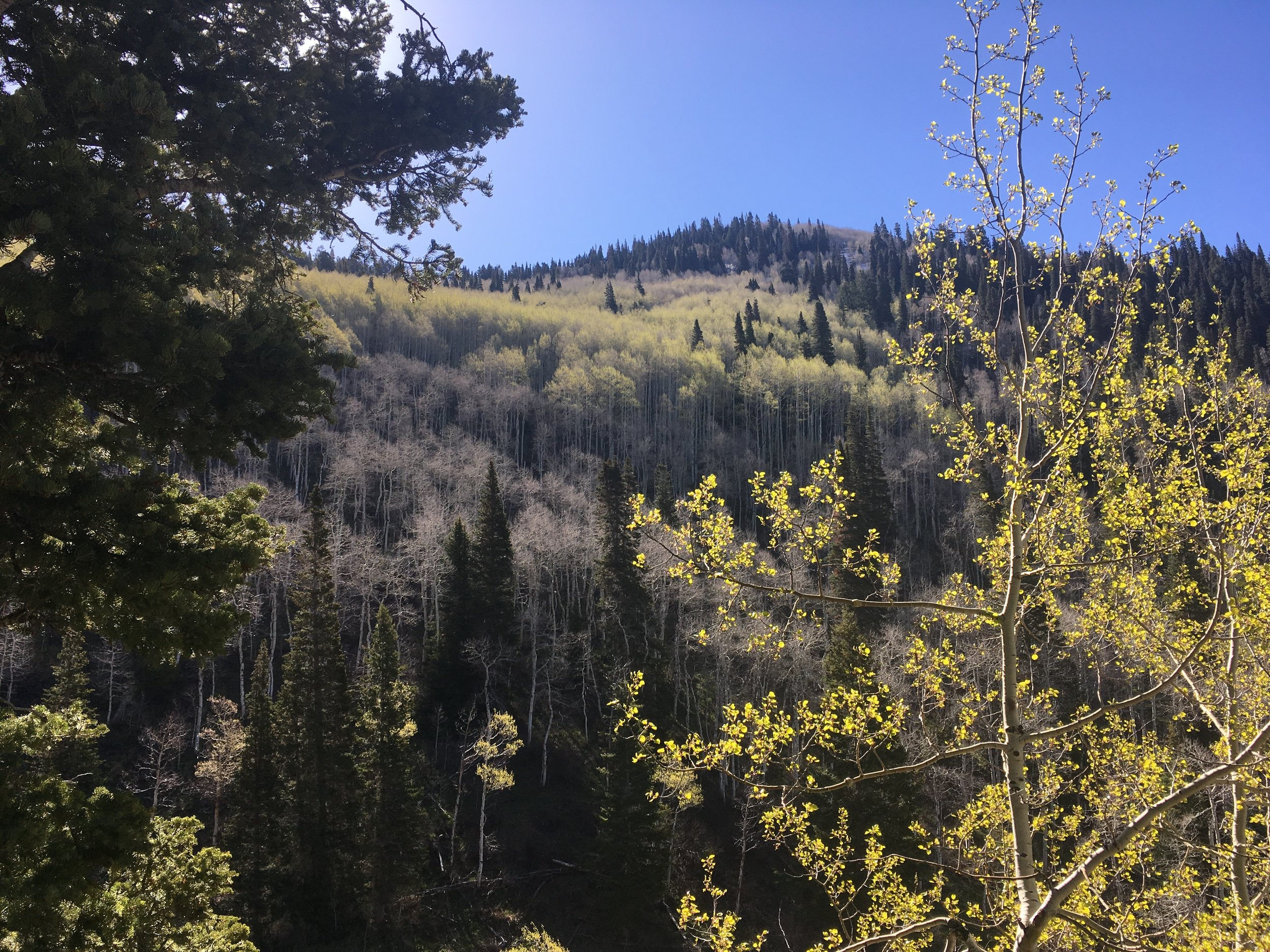 A trek through Big Cottonwood Canyon, just outside of Salt Lake City, UT.