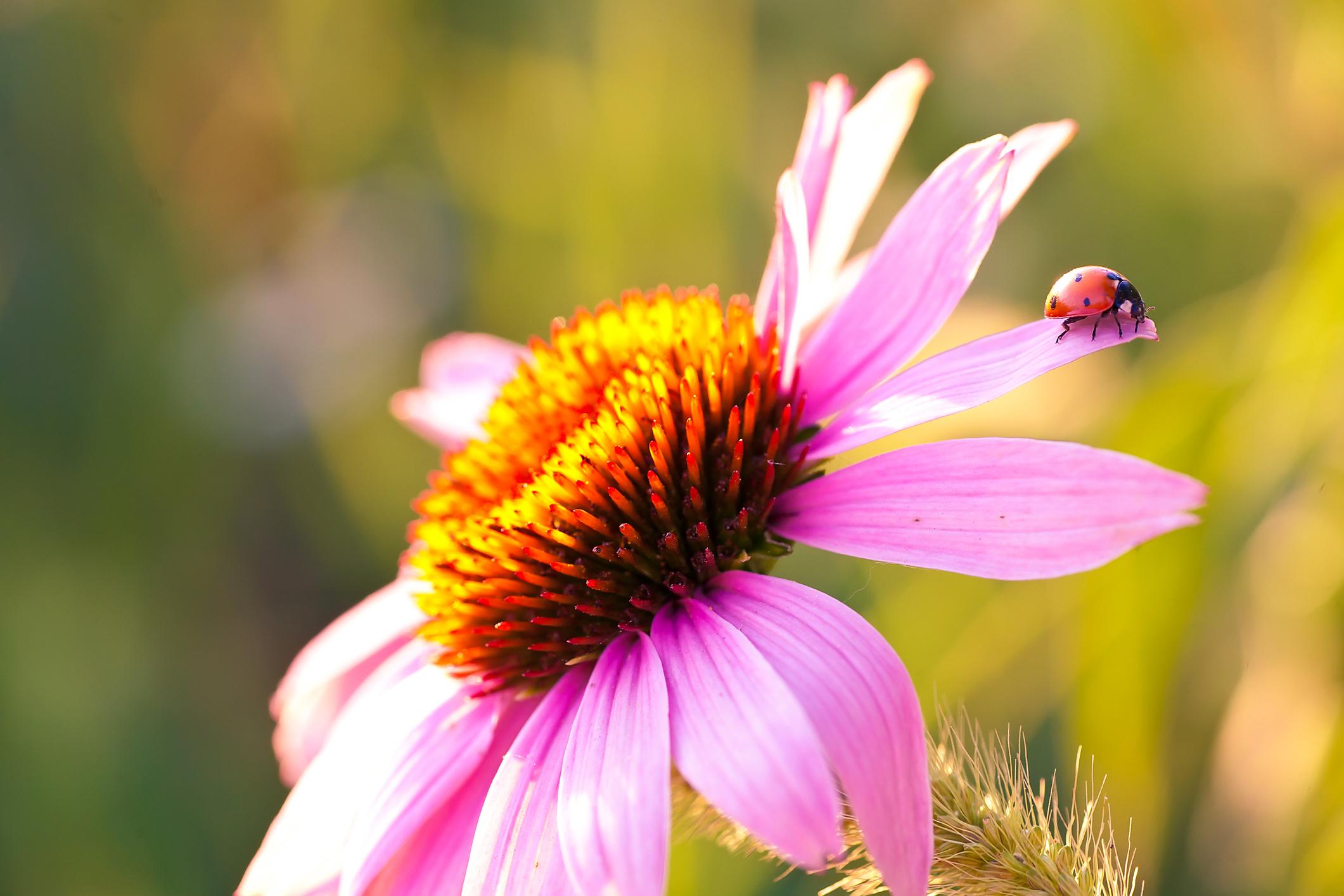 flowerfield.jpg