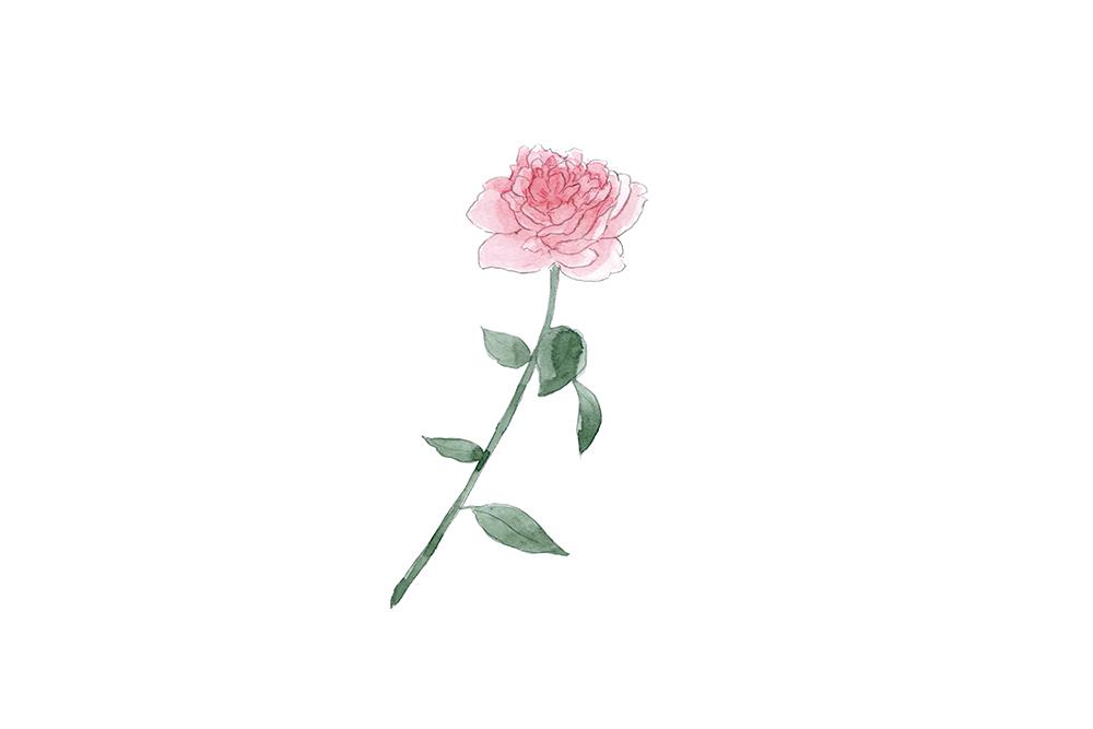 rose1_2_CMYK.jpg