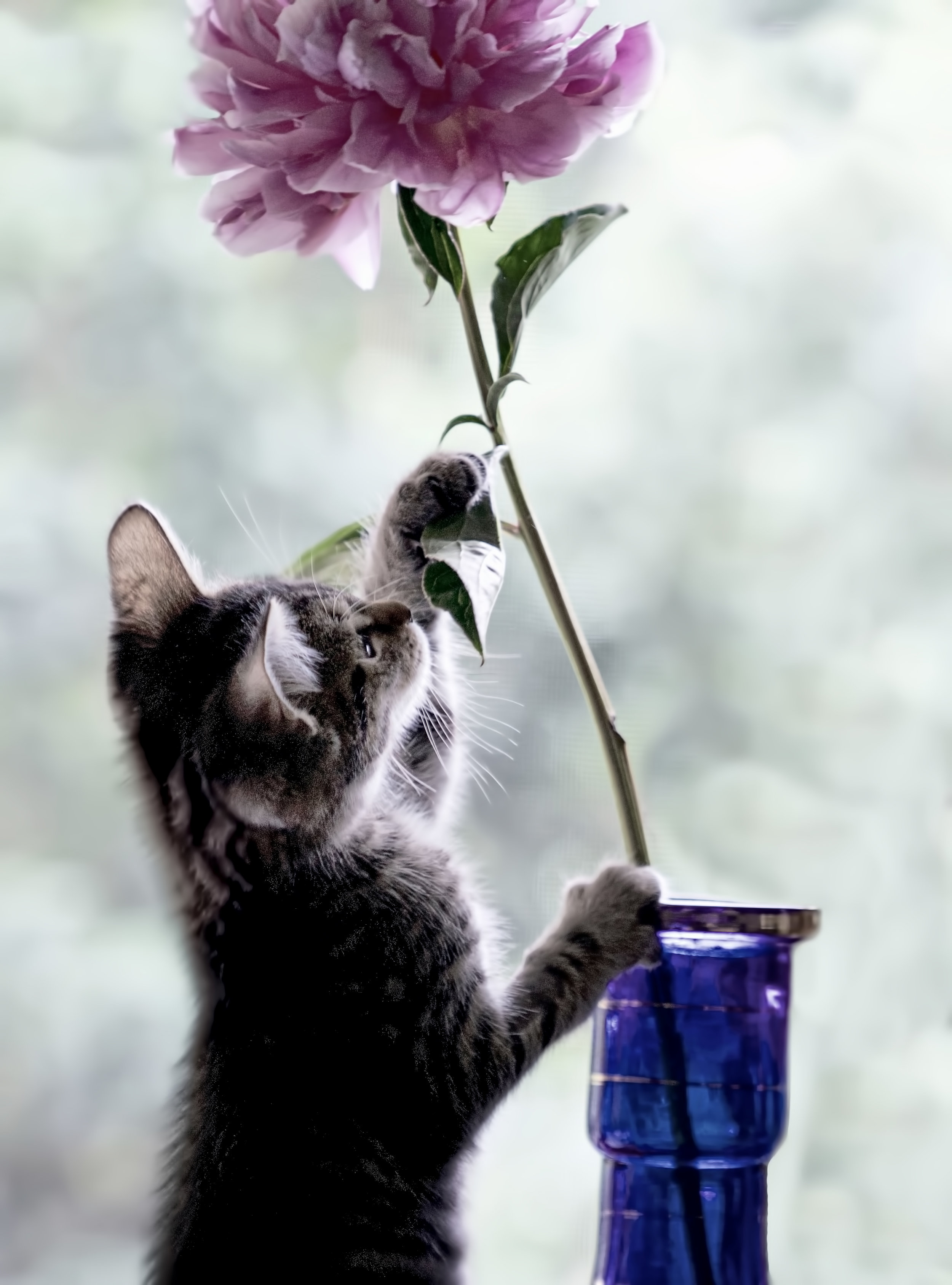 big flower little cat copy copy.jpg