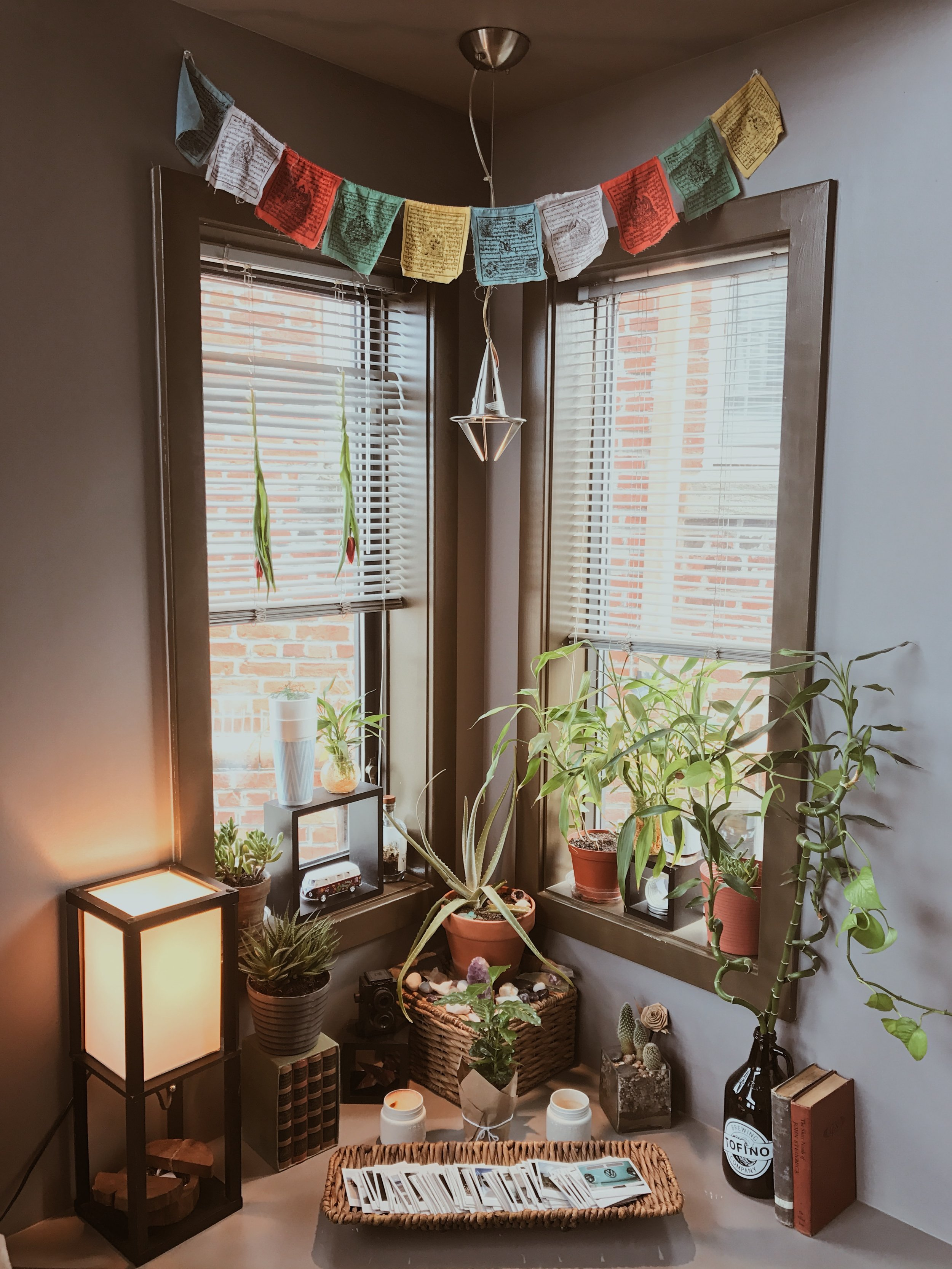 Plants & Polaroids