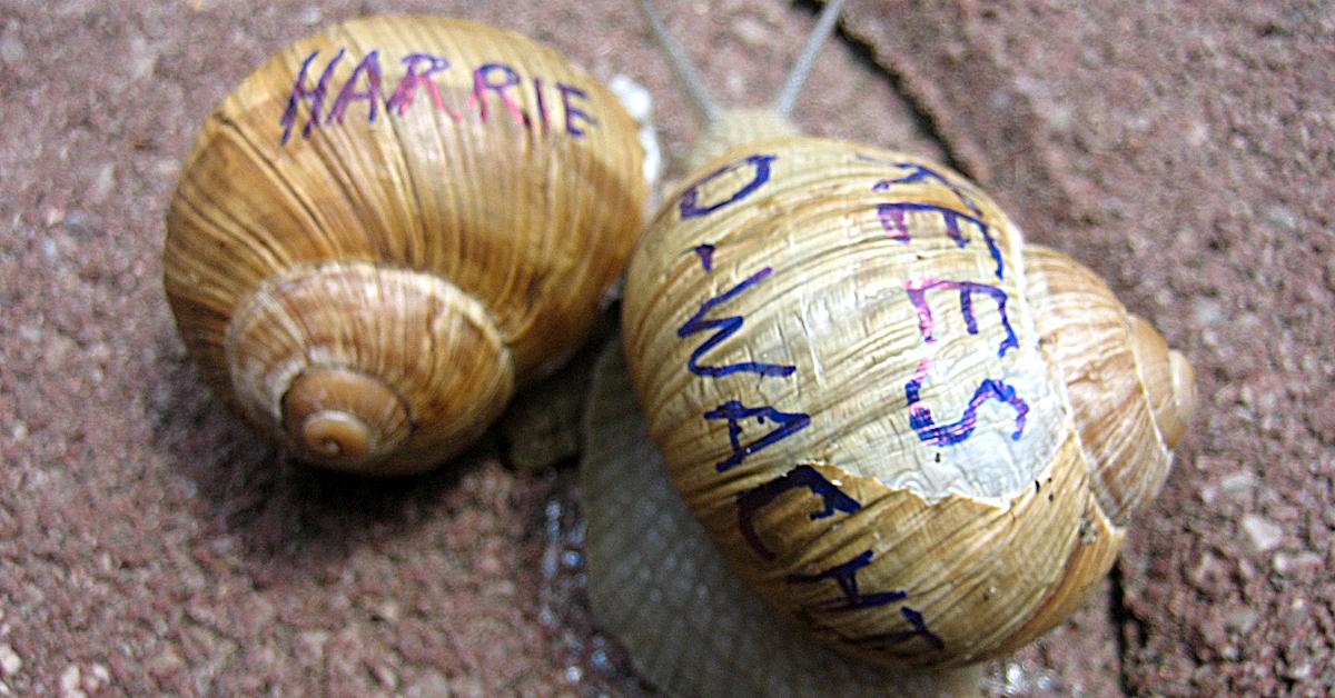We stellen aan je voor: slakken Harrie en Kees (ook wel bekend als de parkeerwacht)