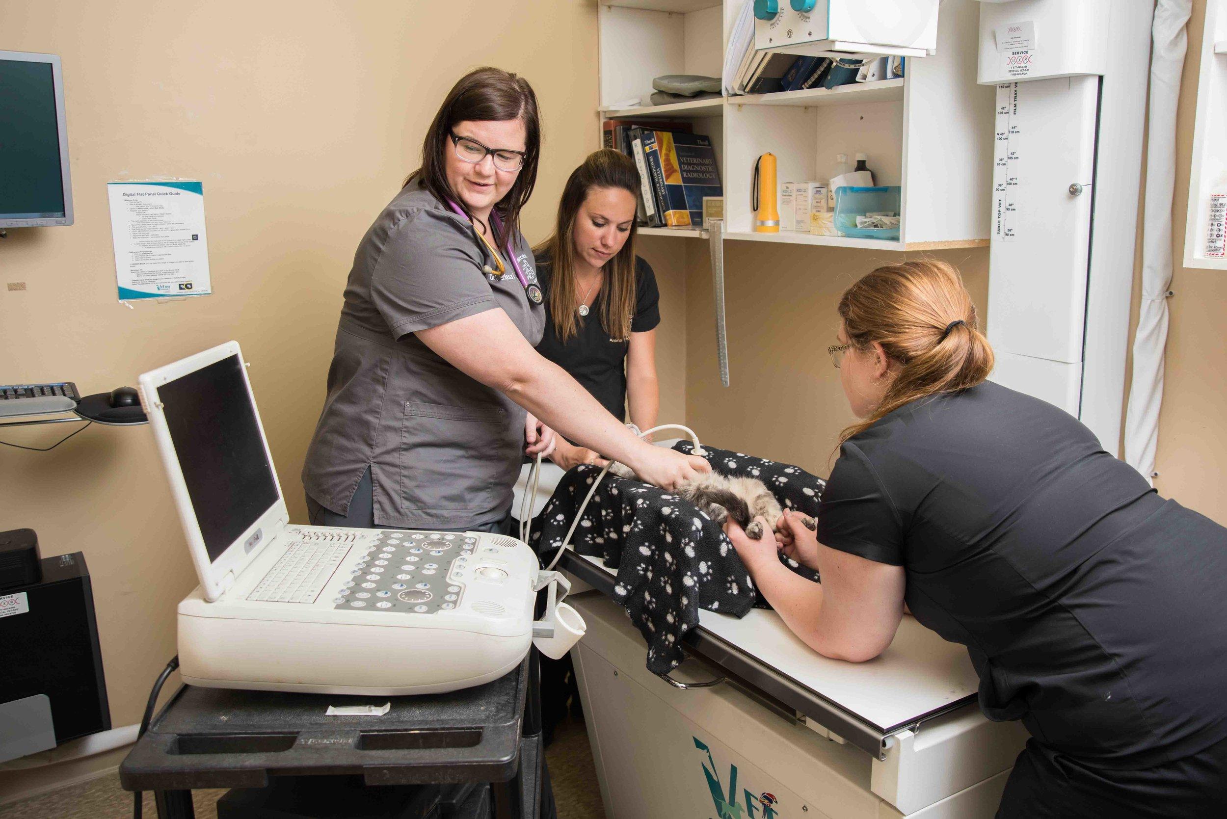 Prescott-Animal_Hospital-ultrasound.jpg