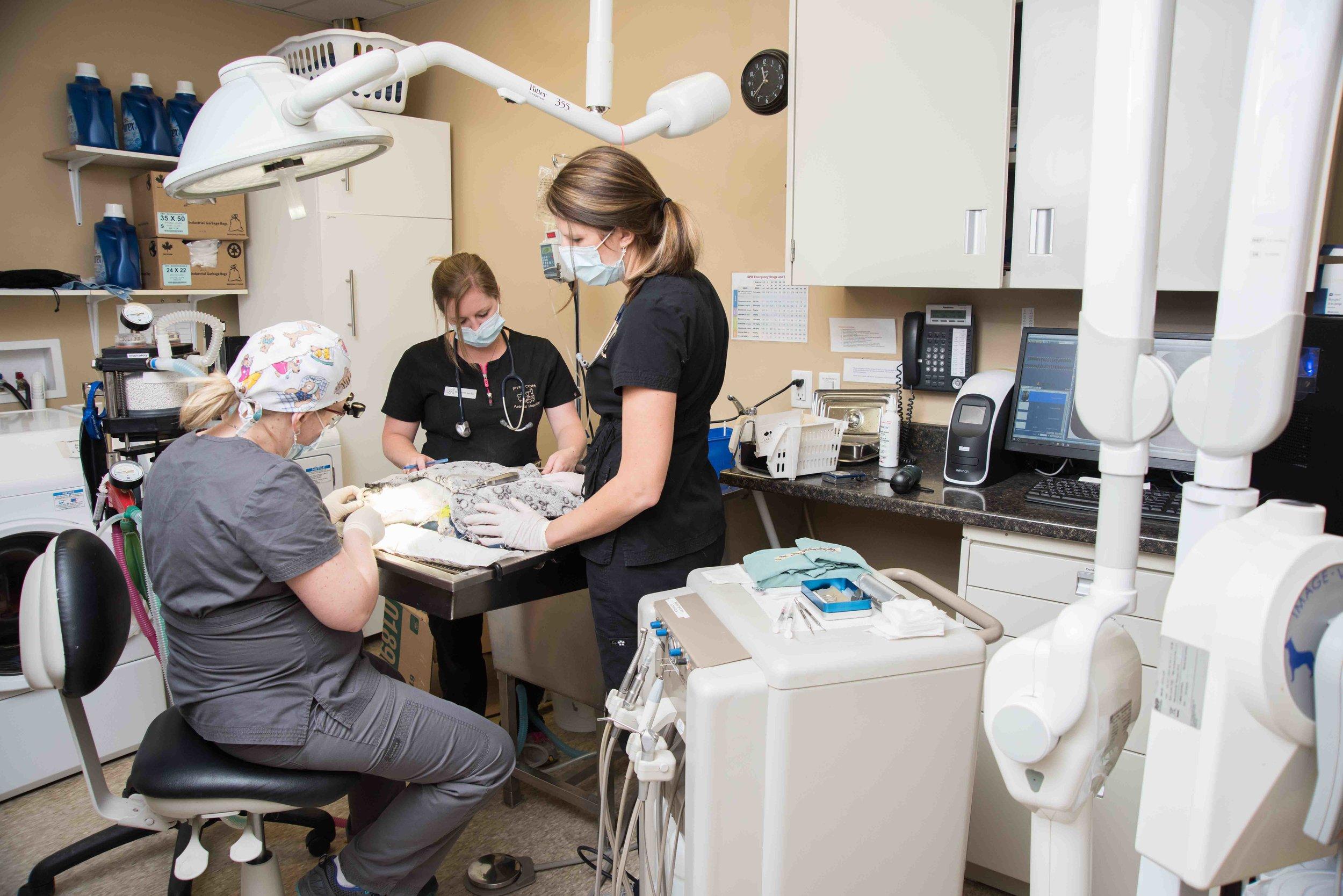 Prescott-Animal-Hospital-Dentistry