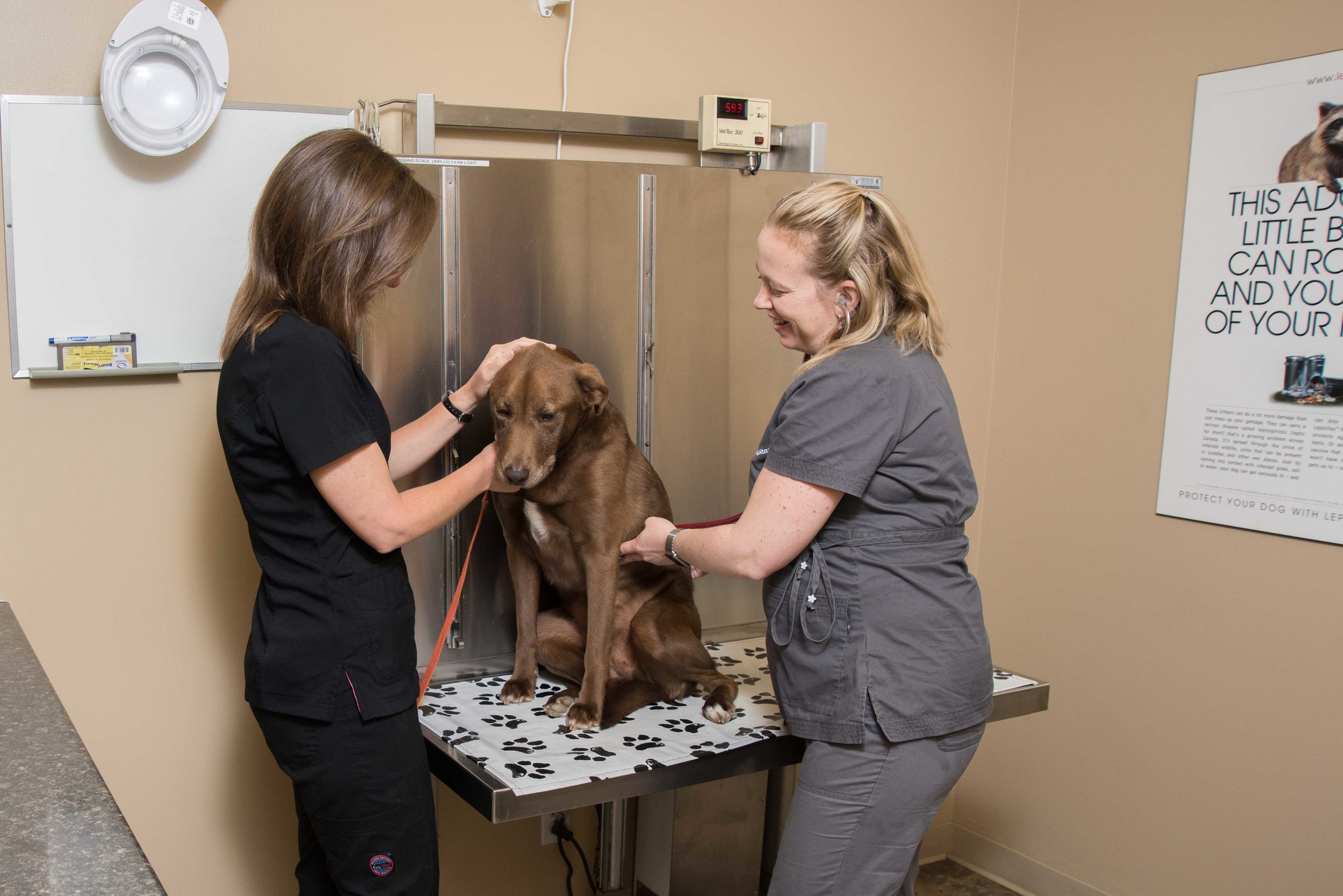 Prescott-Animal-Hospital-4449.jpg
