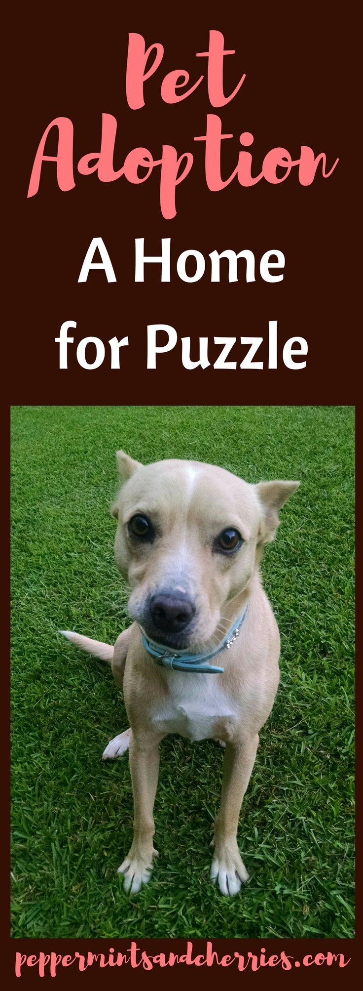 Pet Adoption: A Home for Puzzle