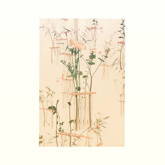 More beautiful #floralinstallations from @jardinblanc_rhs Come What May by @charlottesmythson using meadow flowers in hanging test tubes was breathtaking