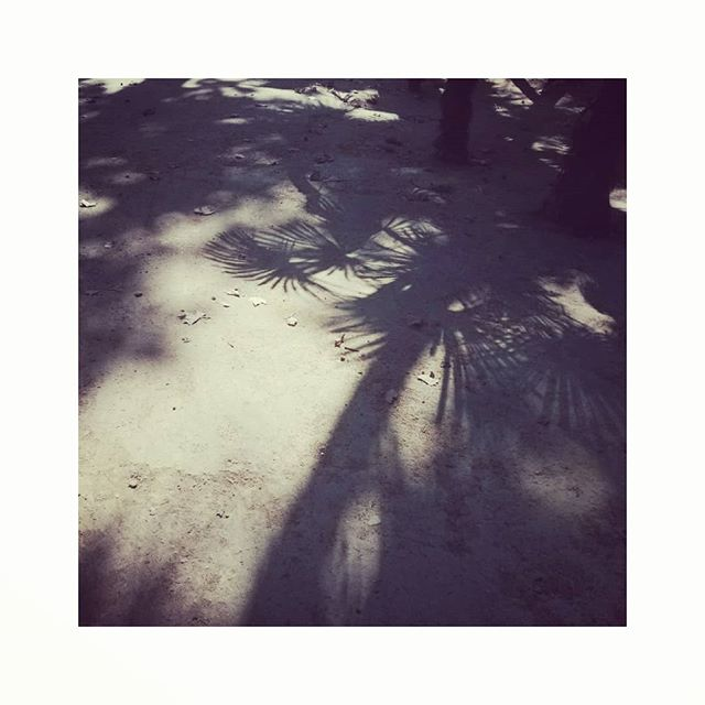 Palm tree shadows in the big park in #seville #cantrememberthename #youknowimfondofashadow #shadows #palmtrees