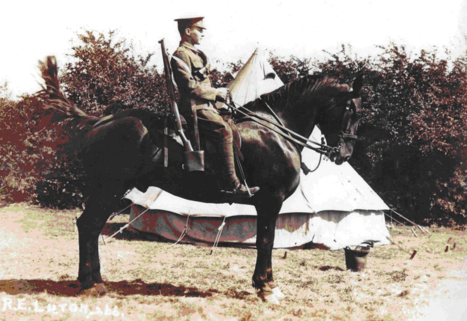 Harry Penton mounted on a dray horse