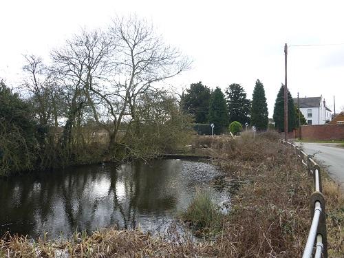 coxe's pond.JPG