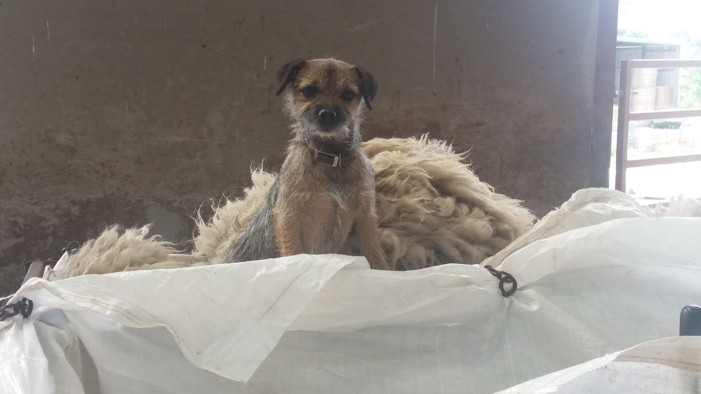 Maisy supervising from a comfy seat in the wool bag