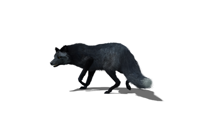 black fox.png