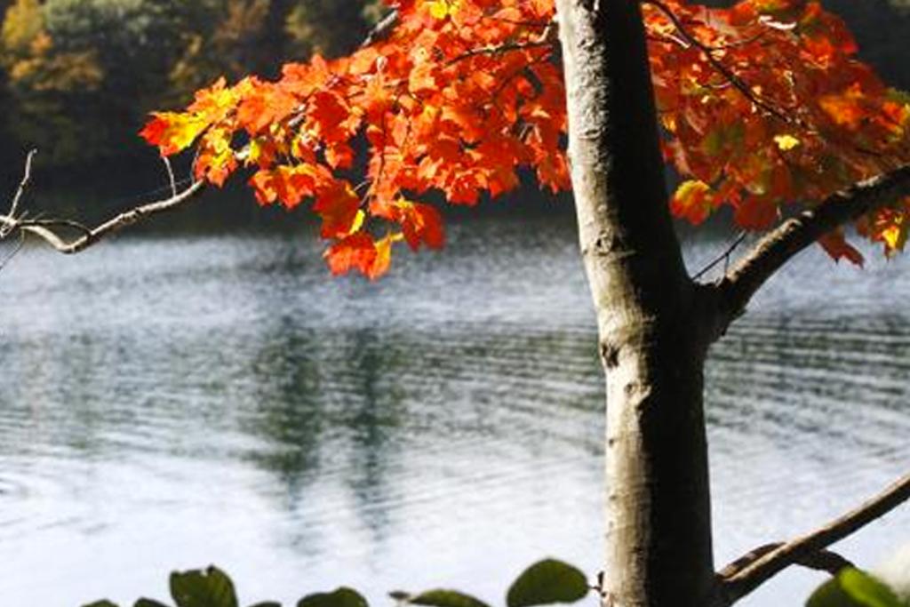 walden-woods.jpg