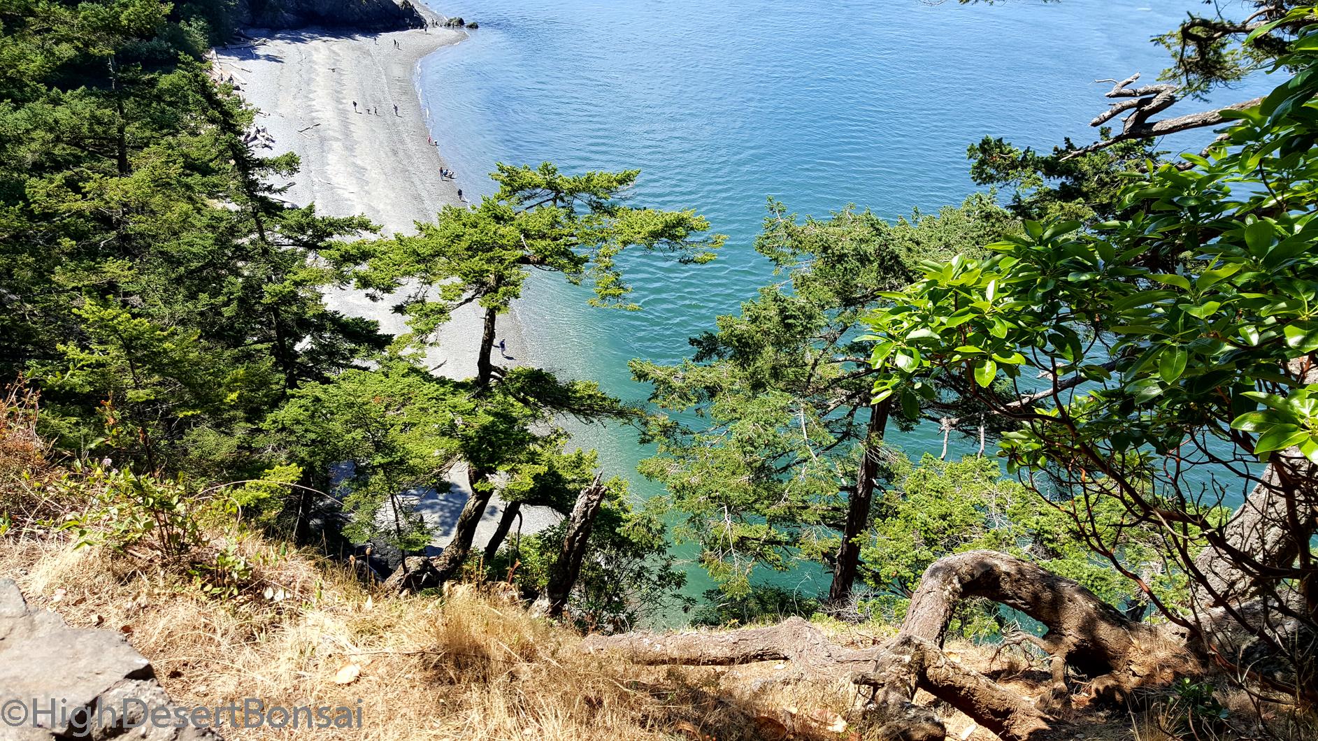 natural bonsai styles