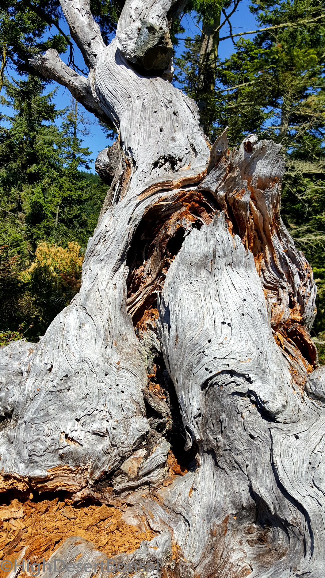 look at that deadwood