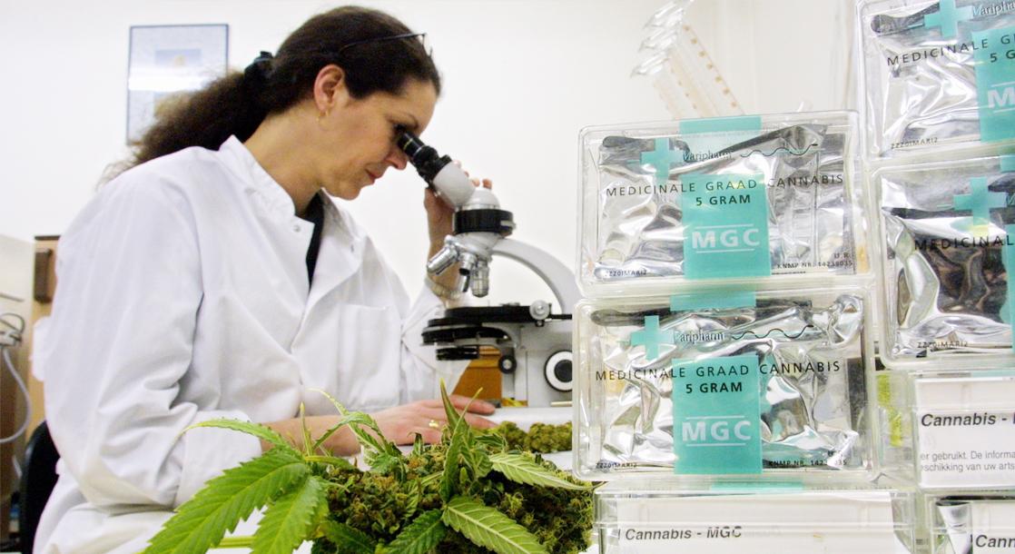cannabis research.jpg