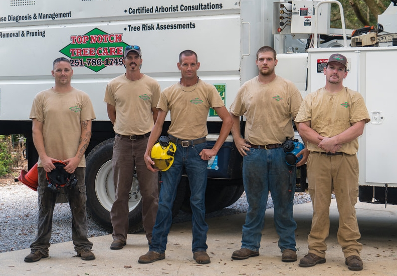- - ISA Certified Arborist (SO-6851A)- ISA Tree Risk Assessment Qualification (TRAQ)- AUFA Certified Urban Forester- ALNLA Certified Landscape Professional- Alabama State Licensed: Ornamental & Turf Pest Control