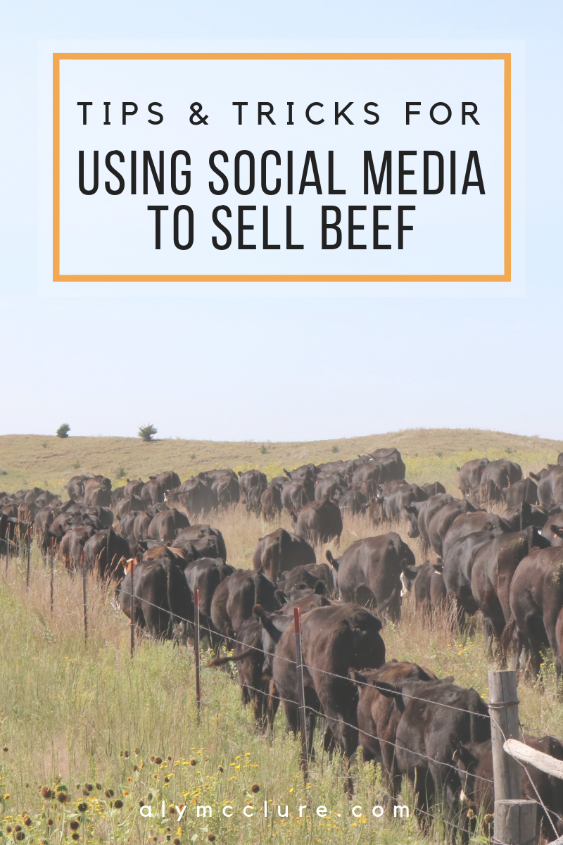 """One of the biggest """"small business"""" avenues for cattle operations looking to diversify their operations is generally in the direct beef sales department. It allows you to use a product that you already have and disperse it in a different way - sometimes a more lucrative way.  Generally referred to as FREEZER BEEF, the process of DIRECT MARKETING BEEF has been a more local process up until recent time. You would set up a store front, go door-to-door, word-of-mouth, or friends and family to sell your product."""