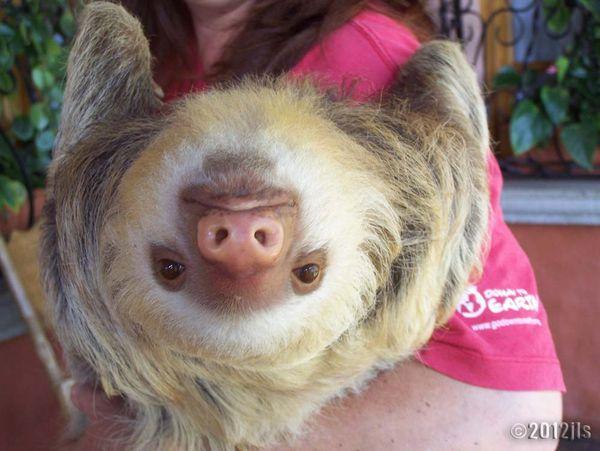 Animal Sanctuary - Costa Rica