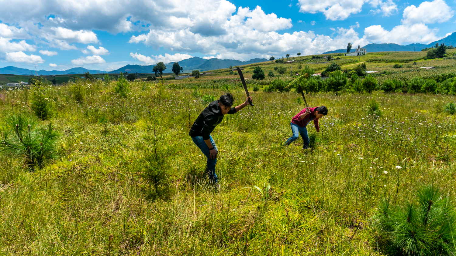 Manual labourers at a reforestation NPO in Xela