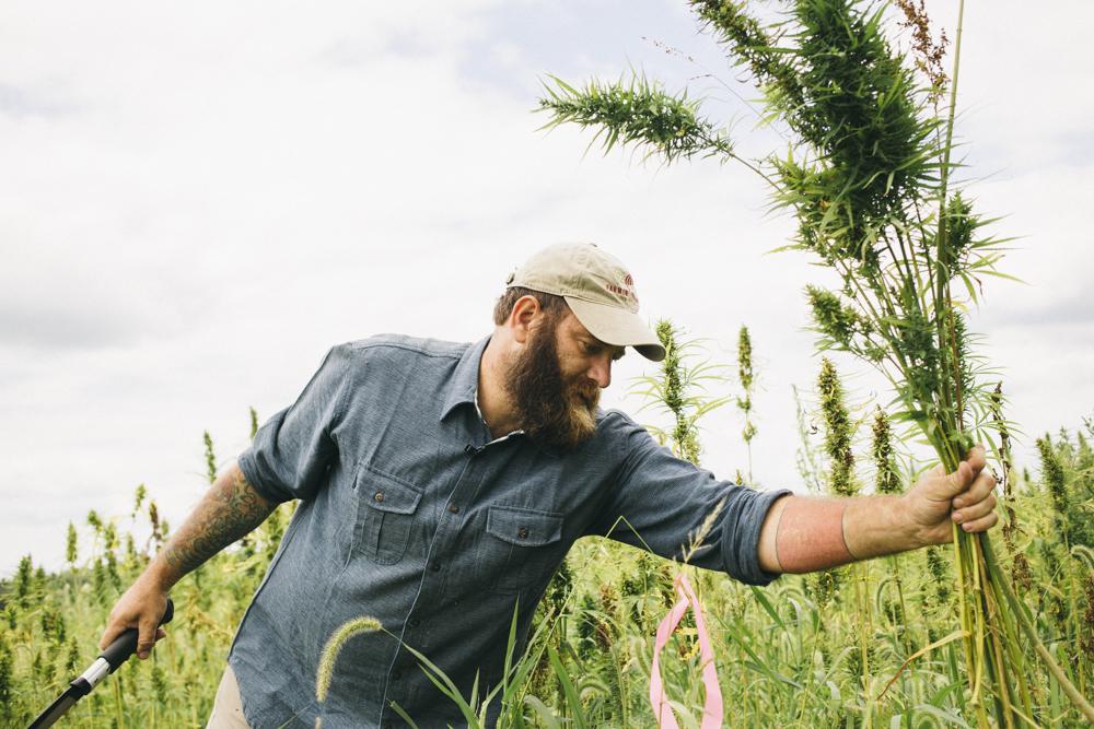 harvesting liberty -
