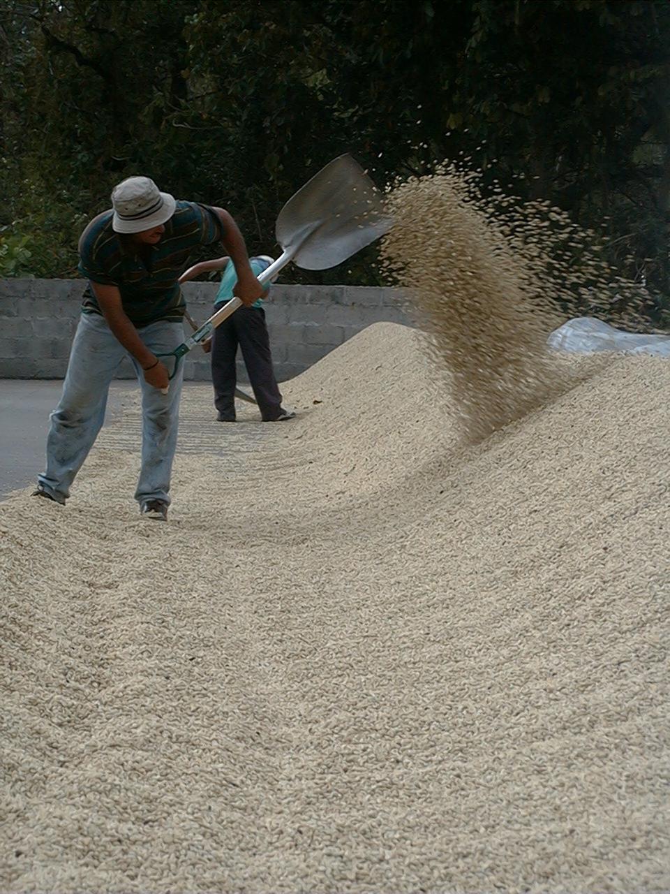 Drying raking 4.jpg